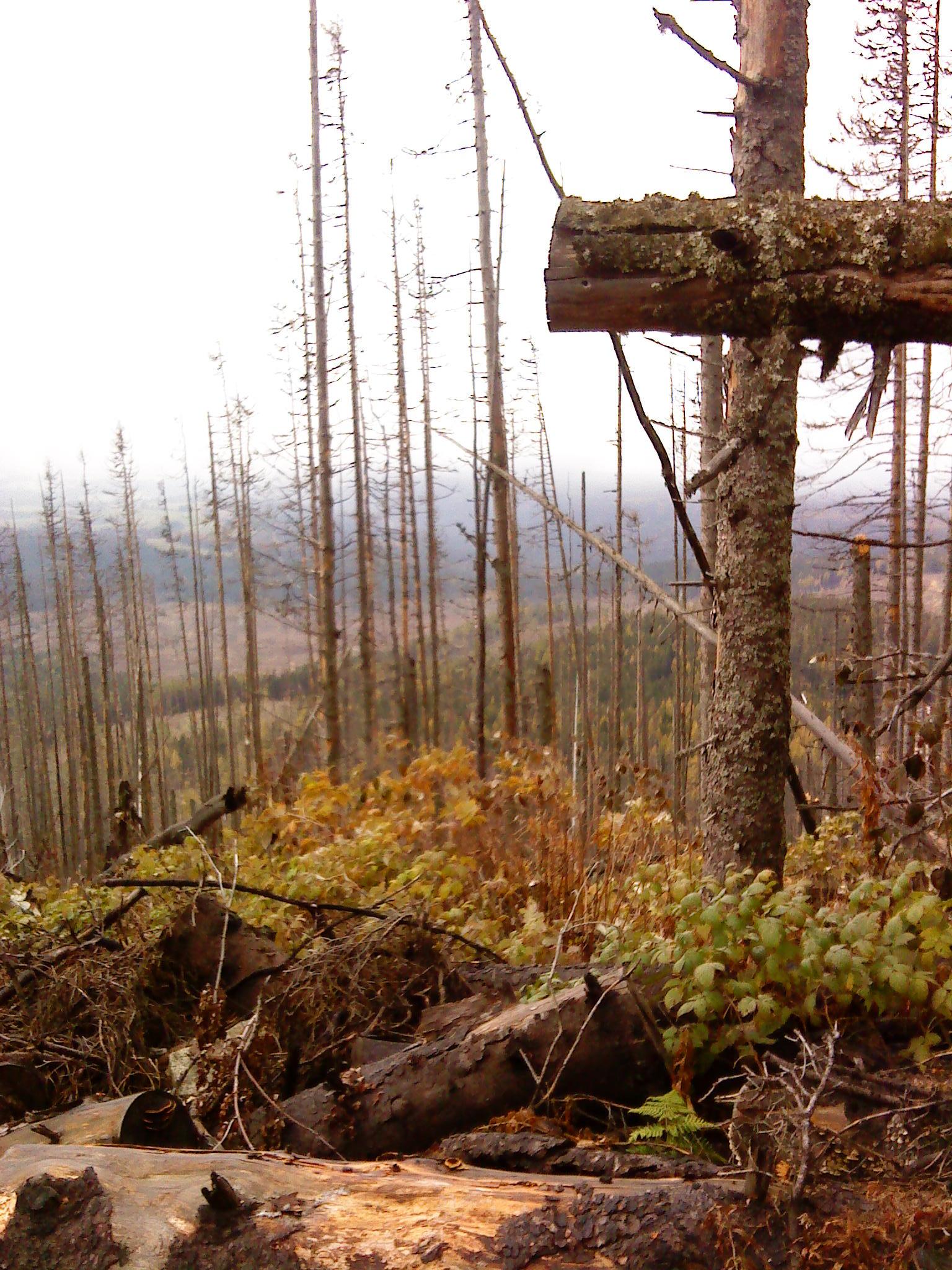 Kříž ze stromů, který jakoby symbolicky říkal, že s krajinou je Amen. Autor: Martin Kirschner.
